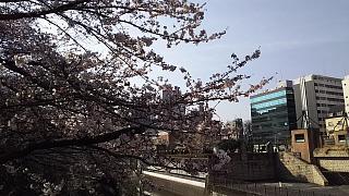 20130331目黒川(その12)