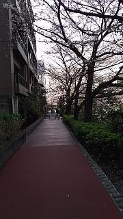 20130331目黒川(その13)