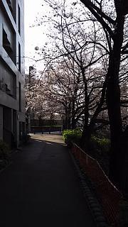 20130331目黒川(その14)