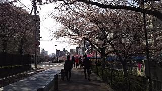 20130331目黒川(その16)