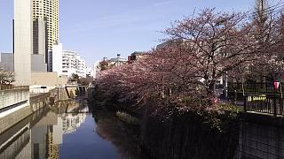 20130331目黒川(その17)