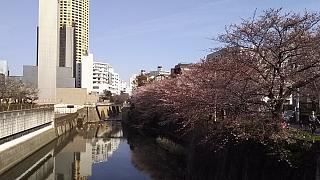 20130331目黒川(その18)