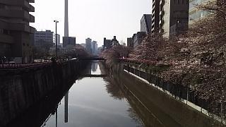 20130331目黒川(その20)