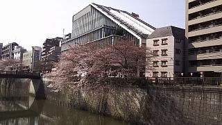 20130331目黒川(その21)