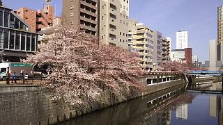 20130331目黒川(その23)