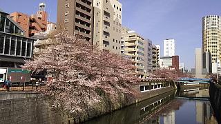 20130331目黒川(その24)