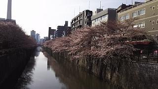 20130331目黒川(その25)
