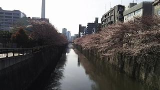 20130331目黒川(その26)