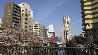 20130331目黒川(その27)