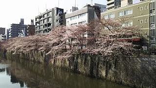 20130331目黒川(その28)