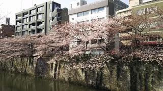 20130331目黒川(その29)