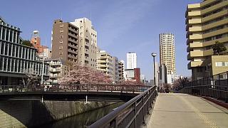 20130331目黒川(その30)