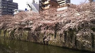 20130331目黒川(その33)