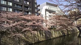 20130331目黒川(その35)