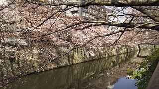20130331目黒川(その36)