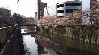 20130331目黒川(その37)