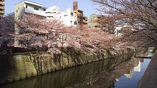 20130331目黒川(その38)