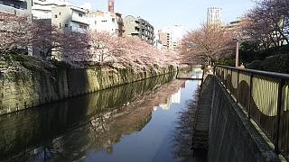 20130331目黒川(その40)