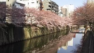 20130331目黒川(その41)