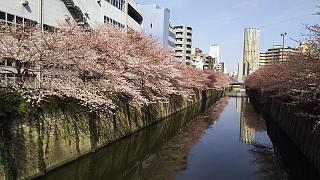 20130331目黒川(その43)