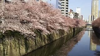 20130331目黒川(その45)