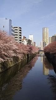 20130331目黒川(その46)