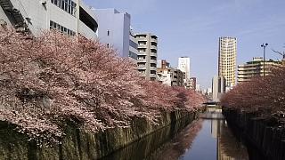 20130331目黒川(その47)