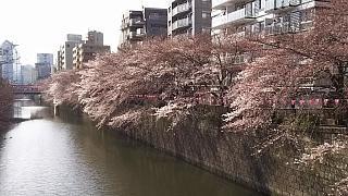 20130331目黒川(その48)