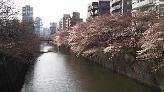20130331目黒川(その49)