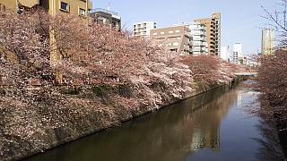 20130331目黒川(その54)