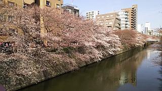 20130331目黒川(その55)