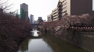 20130331目黒川(その56)