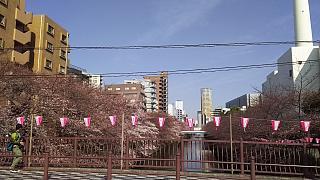 20130331目黒川(その57)