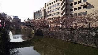 20130331目黒川(その59)