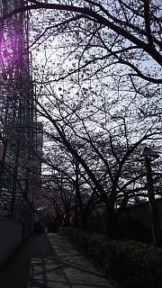 20130331目黒川(その60)