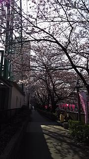 20130331目黒川(その61)