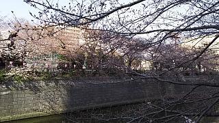 20130331目黒川(その64)