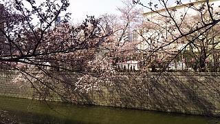 20130331目黒川(その65)