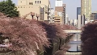 20130331目黒川(その68)