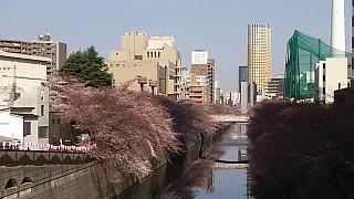 20130331目黒川(その69)