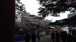 20130331増上寺(その1)