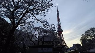 20130331増上寺(その2)