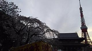 20130331増上寺(その4)