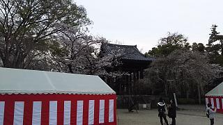 20130331増上寺(その8)