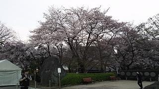 20130331増上寺(その10)