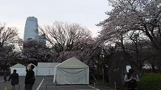 20130331増上寺(その12)