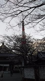 20130331増上寺(その16)
