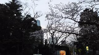 20130331増上寺(その18)