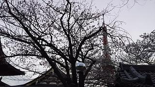 20130331増上寺(その19)
