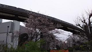 20160402桜(その2)